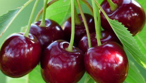 cirese van fruit agro
